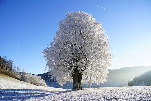 Pour l'hiver